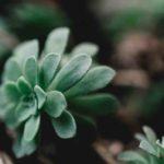 Signification prénom jade