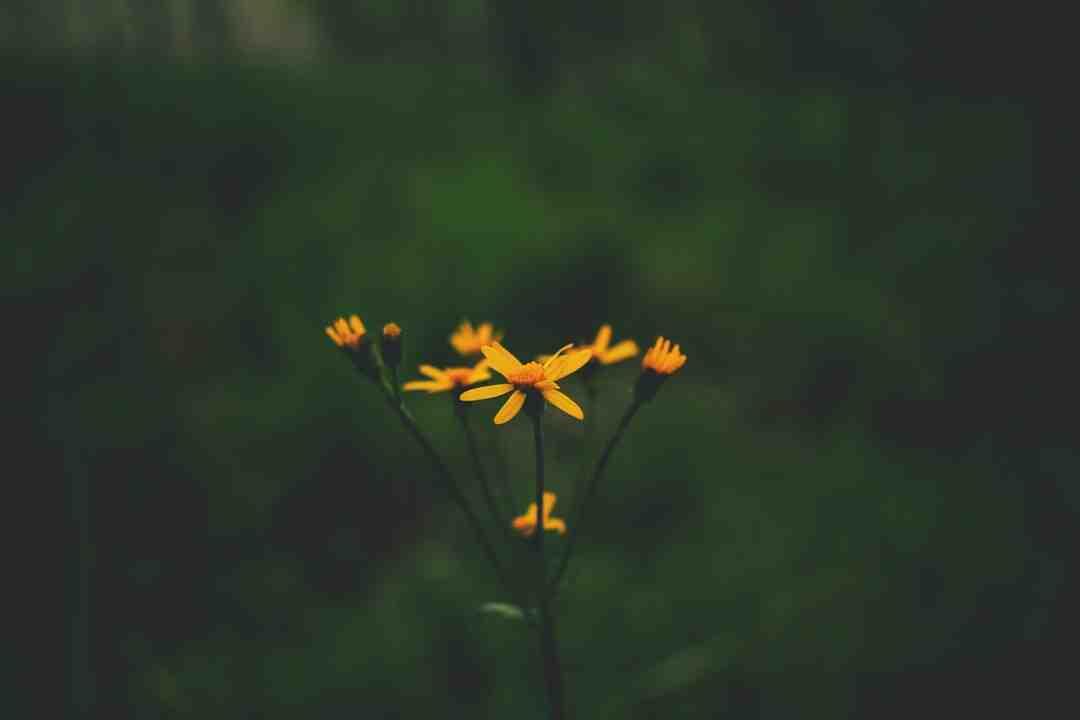 Quelle est la symbolique des fleurs ?
