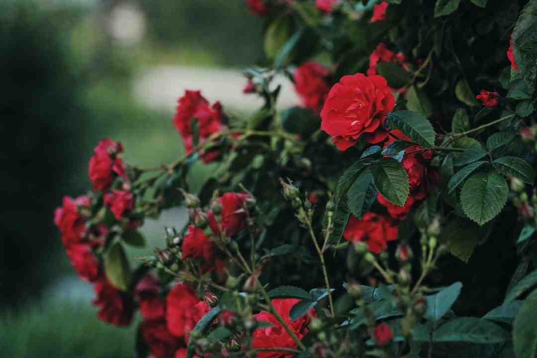 Quelle fleur représente la sensibilité ?