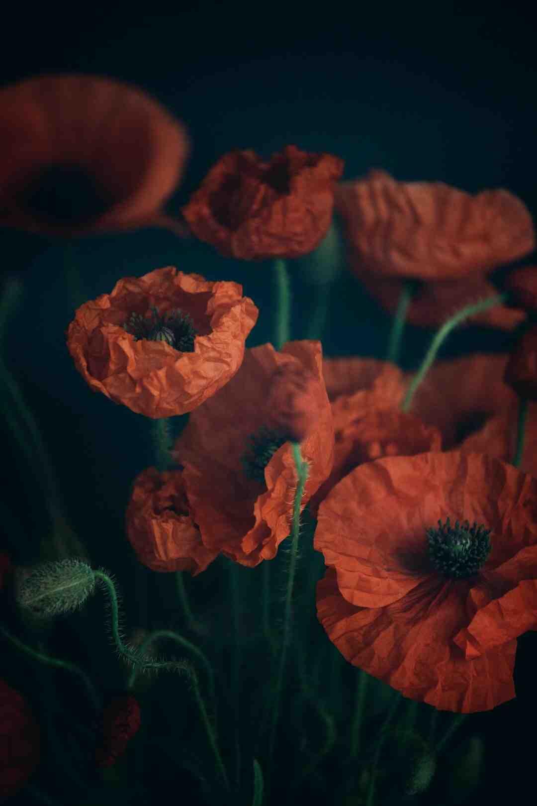 Quelle fleur symbolise la méfiance ?