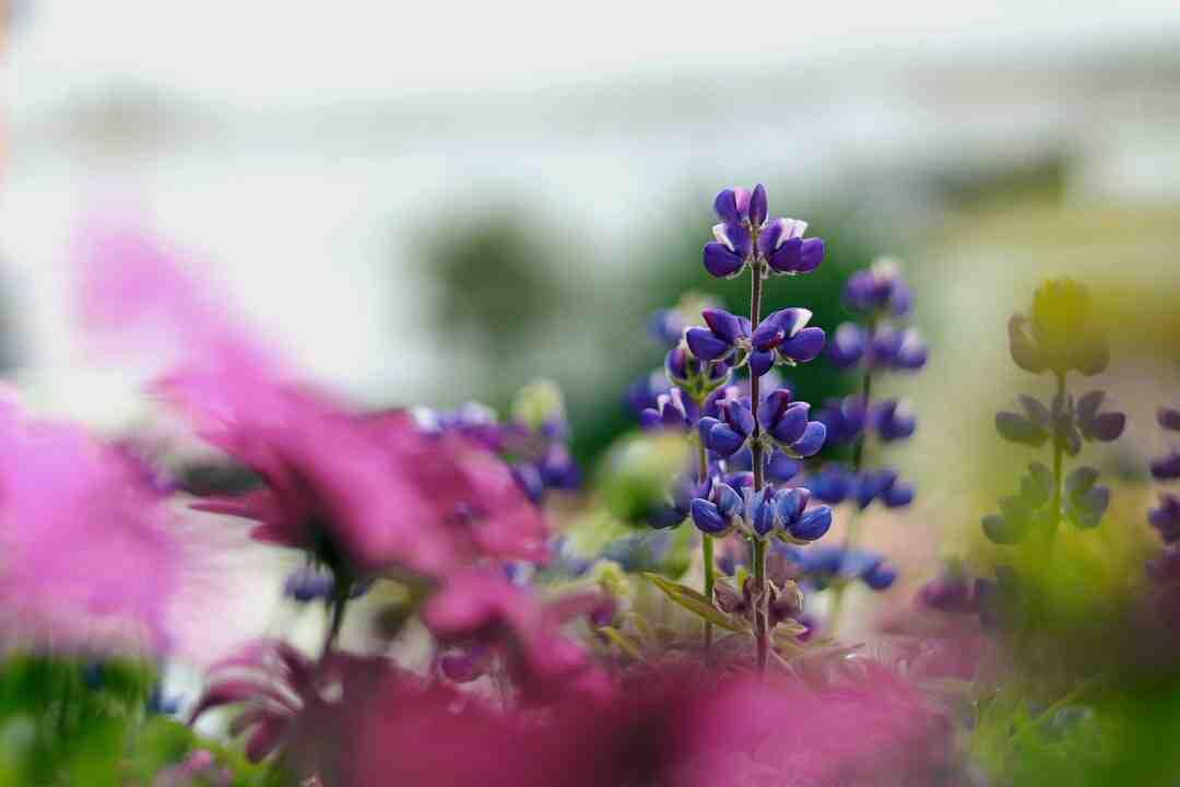 Quelle fleur symbolise l'espoir ?