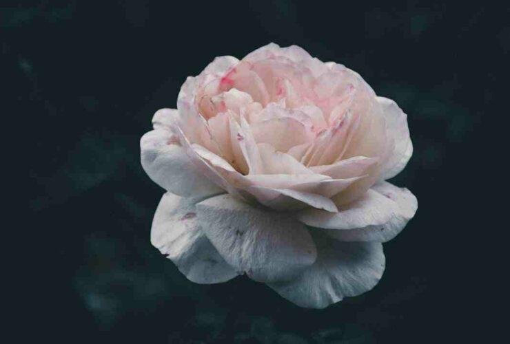 Signification fleur