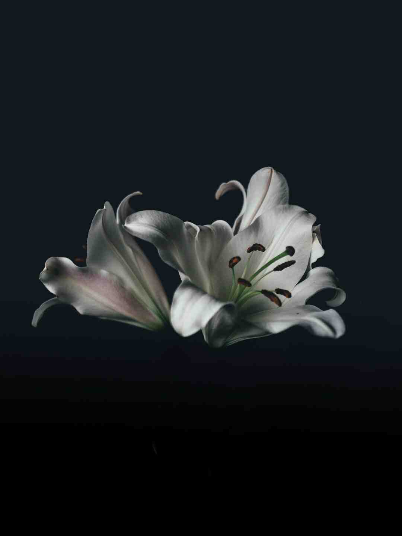 Fleur de lotus signification