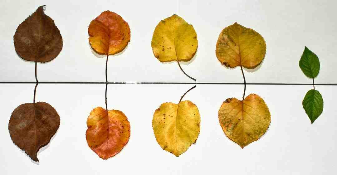 Quel est l'arbre Porte-bonheur ?