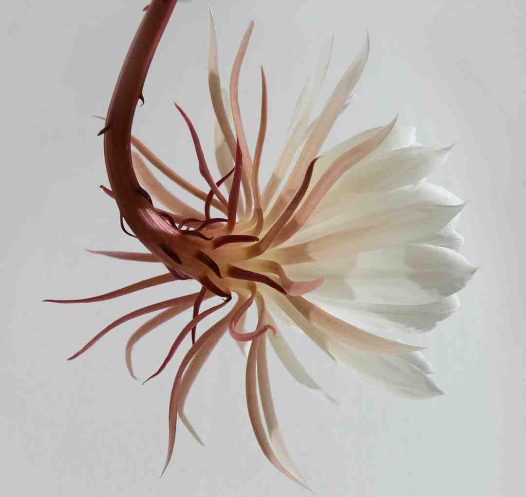 Quelle est la différence entre la fleur de vie et l'arbre de vie ?