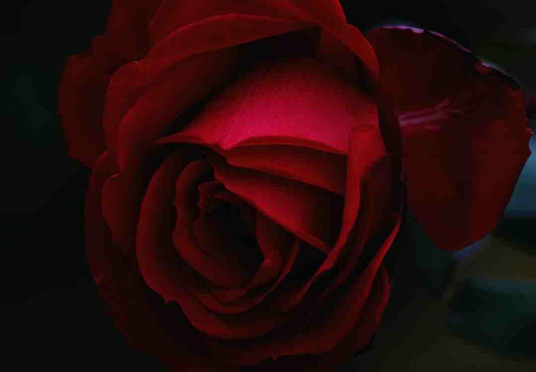 Signification fleur de lotus