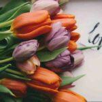 Proverbe arabe sur l amour